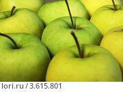 Купить «Зеленые яблоки», фото № 3615801, снято 1 мая 2010 г. (c) Александр Скопинцев / Фотобанк Лори