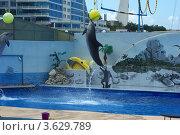 Купить «Севастопольский дельфинарий», фото № 3629789, снято 7 июня 2012 г. (c) Саломатников Владимир / Фотобанк Лори