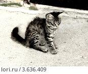 Маленький котенок. Стоковое фото, фотограф Мамонтова Екатерина Александровна / Фотобанк Лори