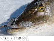 Зимняя рыбалка. Стоковое фото, фотограф Наталья Спиридонова / Фотобанк Лори