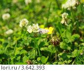 Мотылёк на цветке. Стоковое фото, фотограф Ворошилова Анна / Фотобанк Лори