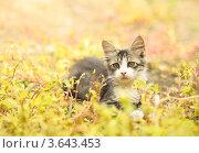 Кот сидит в траве. Стоковое фото, фотограф Андрей Дюжечкин / Фотобанк Лори