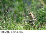 Воробей. Стоковое фото, фотограф Андрей Дюжечкин / Фотобанк Лори
