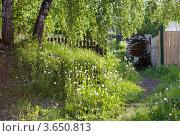 Купить «Березки», фото № 3650813, снято 1 июня 2012 г. (c) Валерий Пчелинцев / Фотобанк Лори