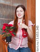 Купить «Девушка опрыскивает комнатное растение пуансеттия (Poinsettia)», фото № 3653345, снято 20 ноября 2010 г. (c) Яков Филимонов / Фотобанк Лори