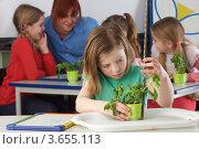 Купить «Школьники на уроке ботаники в классе», фото № 3655113, снято 23 декабря 2010 г. (c) Monkey Business Images / Фотобанк Лори