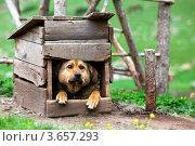 Купить «Собака сидит в будке на улице», эксклюзивное фото № 3657293, снято 29 мая 2012 г. (c) Николай Винокуров / Фотобанк Лори