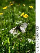 Бабочки. Стоковое фото, фотограф Наталия Банникова / Фотобанк Лори