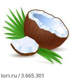 Купить «Половинка кокоса на белом фоне», иллюстрация № 3665301 (c) Dvarg / Фотобанк Лори