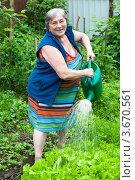 Пожилая женщина поливает огород. Стоковое фото, фотограф Куликова Вероника / Фотобанк Лори