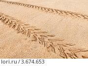 Купить «Следы от квадроцикла-багги на песке», фото № 3674653, снято 11 января 2012 г. (c) pzAxe / Фотобанк Лори