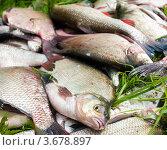 Купить «Разная рыба лежит на траве», эксклюзивное фото № 3678897, снято 18 июля 2012 г. (c) Игорь Низов / Фотобанк Лори