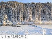 Зимний лес. Стоковое фото, фотограф Юлия Науменко / Фотобанк Лори