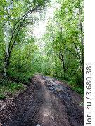 Лесная дорога проложена по смешанному  лесу. Стоковое фото, фотограф OV1957 / Фотобанк Лори