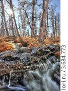 Купить «Северная природа», фото № 3684773, снято 31 мая 2009 г. (c) Ахметсафин Руслан / Фотобанк Лори