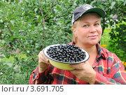 Купить «Женщина собирает чёрную смородину», эксклюзивное фото № 3691705, снято 16 июля 2012 г. (c) Юрий Морозов / Фотобанк Лори