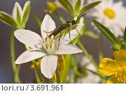 Среди цветов. Стоковое фото, фотограф Виктор Зандер / Фотобанк Лори