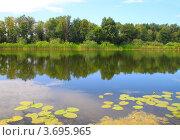 Летнее озеро с кувшинками. Стоковое фото, фотограф Петр Карташов / Фотобанк Лори