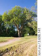 Памятник природы дуб-великан вблизи Вёшенской. Стоковое фото, фотограф Борис Панасюк / Фотобанк Лори