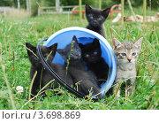 Котята в ведре. Стоковое фото, фотограф Арти Homa / Фотобанк Лори