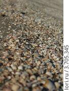 Морские ракушки на пляже. Стоковое фото, фотограф Александр Гречин / Фотобанк Лори