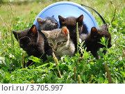 Пять красивых малышей. Стоковое фото, фотограф Арти Homa / Фотобанк Лори