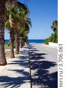 Пальмы вдоль дороги, ведущей к морю. Стоковое фото, фотограф Владислав Сернов / Фотобанк Лори