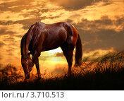 Купить «Лошадь на закате», фото № 3710513, снято 18 февраля 2019 г. (c) Julia Shepeleva / Фотобанк Лори