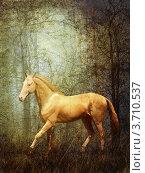 Изабеловый ахалтекинец в лесу. Изображение с имитацией старой потертой открытки. Стоковое фото, фотограф Julia Shepeleva / Фотобанк Лори