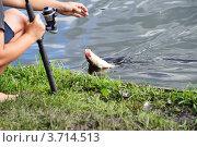 Ловля рыбы. Стоковое фото, фотограф Татьяна Кахилл / Фотобанк Лори