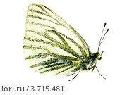 Бабочка на белом фоне. Стоковое фото, фотограф Петеляева Татьяна / Фотобанк Лори