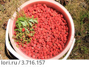 Купить «Заготовка лесных ягод. Плоды малины и земляники, собранные в ведро», эксклюзивное фото № 3716157, снято 10 августа 2011 г. (c) Rekacy / Фотобанк Лори