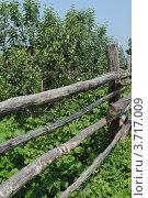 Яблони за изгородью на Алтае. Стоковое фото, фотограф Олег Брагин / Фотобанк Лори