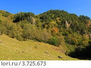 Купить «Осенний лес. Курорта «Архыз». КЧР», эксклюзивное фото № 3725673, снято 8 октября 2011 г. (c) Rekacy / Фотобанк Лори