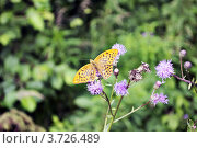 Бабочка. Стоковое фото, фотограф Александр Онучин / Фотобанк Лори