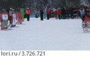 Купить «Гонки на собачьих упряжках», видеоролик № 3726721, снято 8 февраля 2010 г. (c) Egorius / Фотобанк Лори