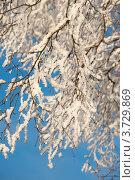 Купить «Искрящиеся на солнце снежная ветки дерева», фото № 3729869, снято 8 декабря 2010 г. (c) Татьяна Кахилл / Фотобанк Лори