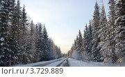 Зимняя дорога в лесу. Стоковое фото, фотограф Юлия Науменко / Фотобанк Лори