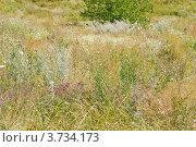 Купить «Степная растительность», эксклюзивное фото № 3734173, снято 29 июля 2012 г. (c) Алёшина Оксана / Фотобанк Лори