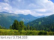 Купить «Горный пейзаж с кедрами, Алтай», фото № 3734333, снято 18 июля 2011 г. (c) Яков Филимонов / Фотобанк Лори