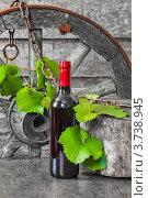 Бутылка вина и виноградная лоза в старинном антураже. Стоковое фото, фотограф Олег Жуков / Фотобанк Лори
