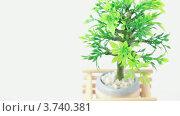 Купить «Декоративное растение в горшке», видеоролик № 3740381, снято 15 августа 2011 г. (c) Losevsky Pavel / Фотобанк Лори