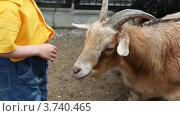 Купить «Маленький мальчик стоит рядом с козой», видеоролик № 3740465, снято 6 августа 2011 г. (c) Losevsky Pavel / Фотобанк Лори