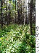 Таежный пейзаж. Стоковое фото, фотограф OV1957 / Фотобанк Лори