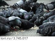 Голуби клюют зерно. Стоковое фото, фотограф Елена Таранец / Фотобанк Лори