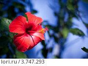 Красный цветок. Стоковое фото, фотограф Elena Guseva / Фотобанк Лори