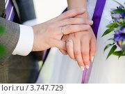 Молодожены держатся за руки. Стоковое фото, фотограф Алексей Казнадей / Фотобанк Лори