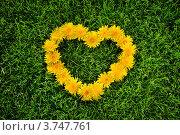 Одуванчиковое сердце на траве. Стоковое фото, фотограф Алексей Казнадей / Фотобанк Лори