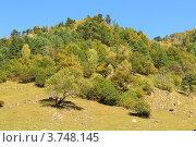 Купить «Осенний лес. Курорт «Архыз». КЧР», эксклюзивное фото № 3748145, снято 8 октября 2011 г. (c) Rekacy / Фотобанк Лори
