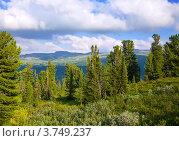Горный пейзаж с лесом. Алтай, Сибирь. Стоковое фото, фотограф Яков Филимонов / Фотобанк Лори
